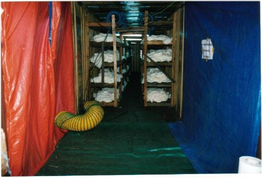 Yarn Contaminated with Soot and Mold