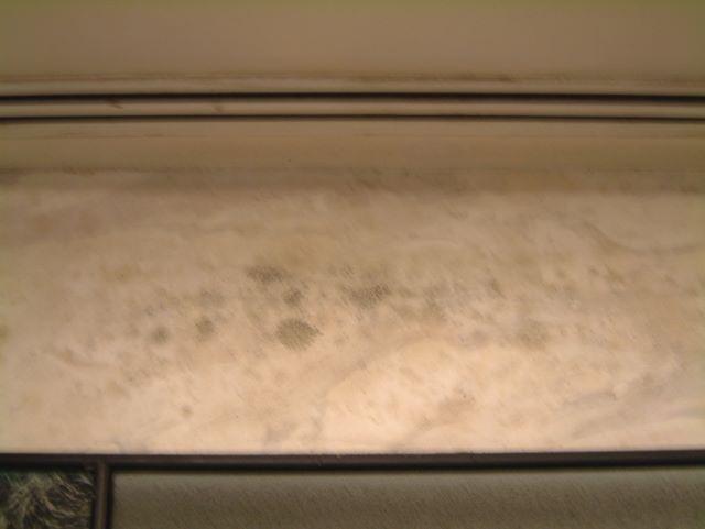 Indoor Environment Contaminated With Aspergillus Mold