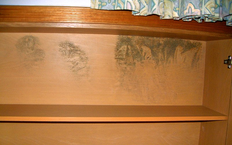 Mold Removal Singapore Mold Remediation Mold Cleanup Drs
