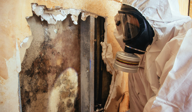 Mold Remediation Service by Disaster Restoration Singapore