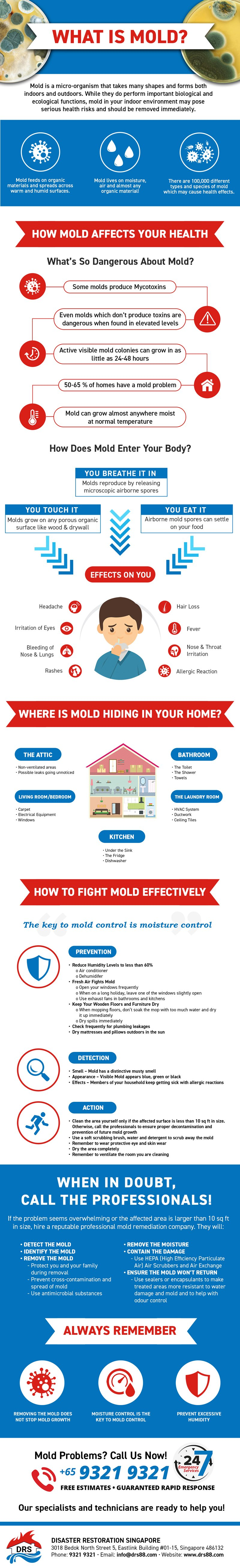 Infographic about Mold