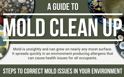 A Guide to Mold Cleanup