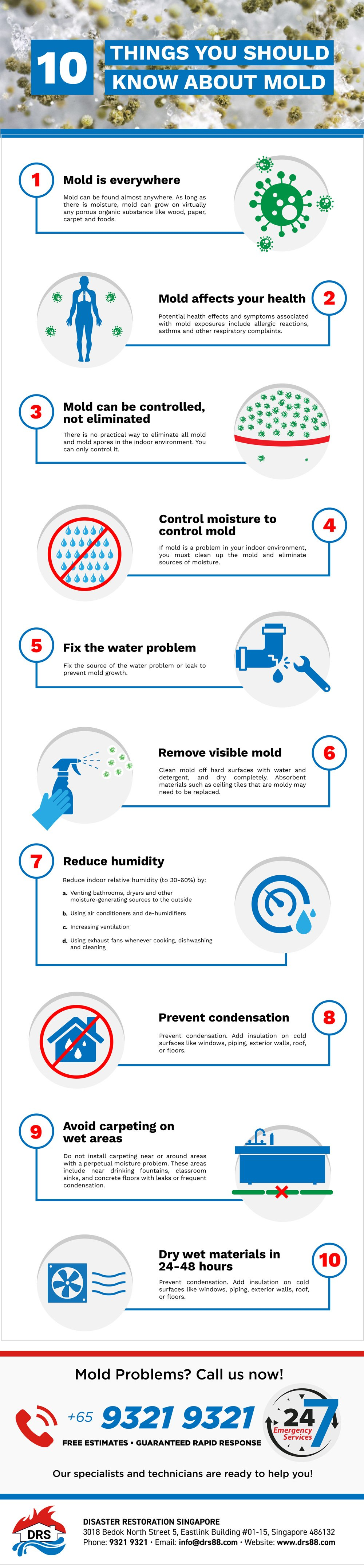 Mold Infographic Singapore - 10 Things You Should Know About Mold