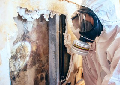 Inspection of Mold Contaminated Wall