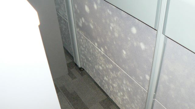 Fungus Growing on Walls in Office