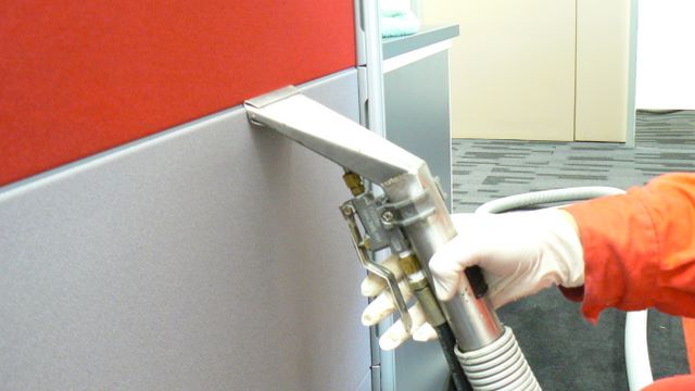 How to Get Rid of Mold in Office in Singapore
