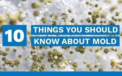 10 Things You Should Know About Mold